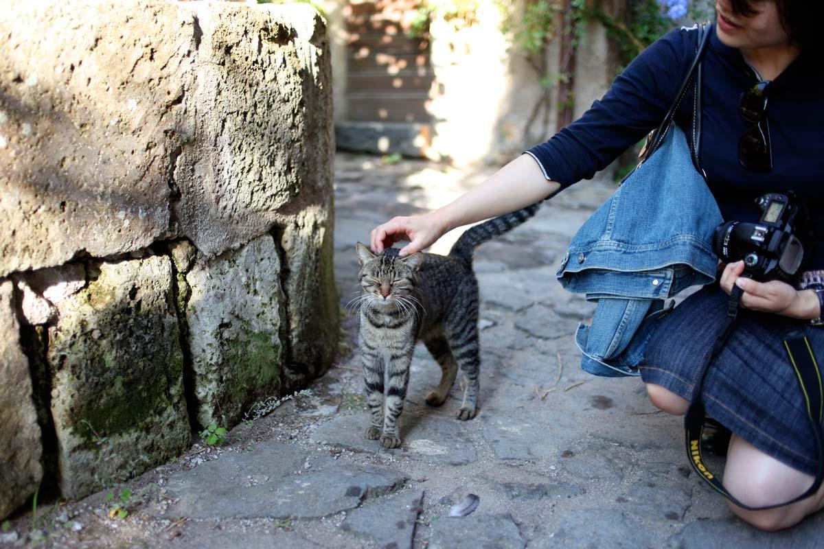 civita-bagnoregio-cats