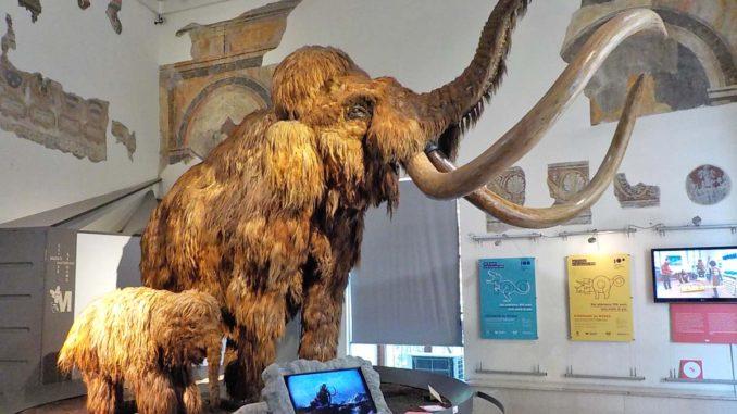ベルガモの自然史博物館