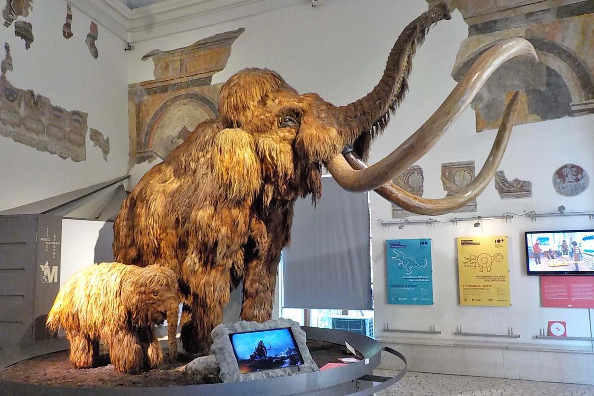bergamo_museo-civico-scienze-naturali