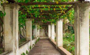 サレルノのミネルヴァ庭園