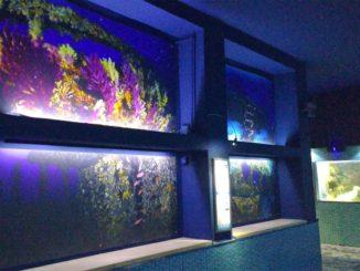 メッシーナ水族館