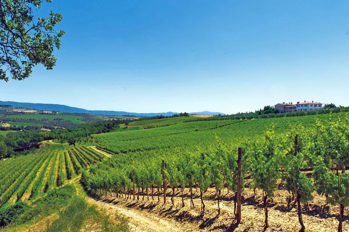 orvieto-winery