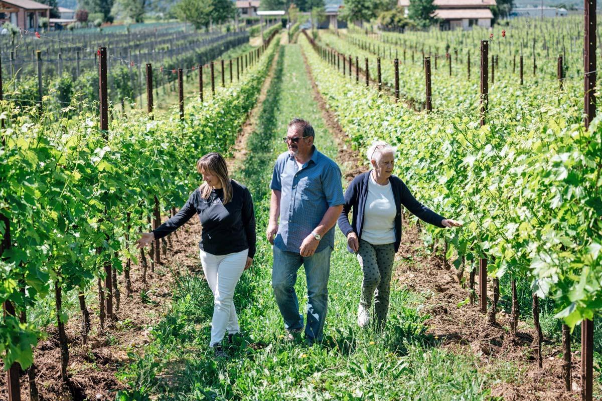 セッコの里のブドウ畑とカンティーナ訪問