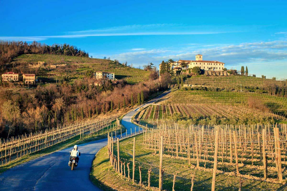 venezia_friuli-winery1