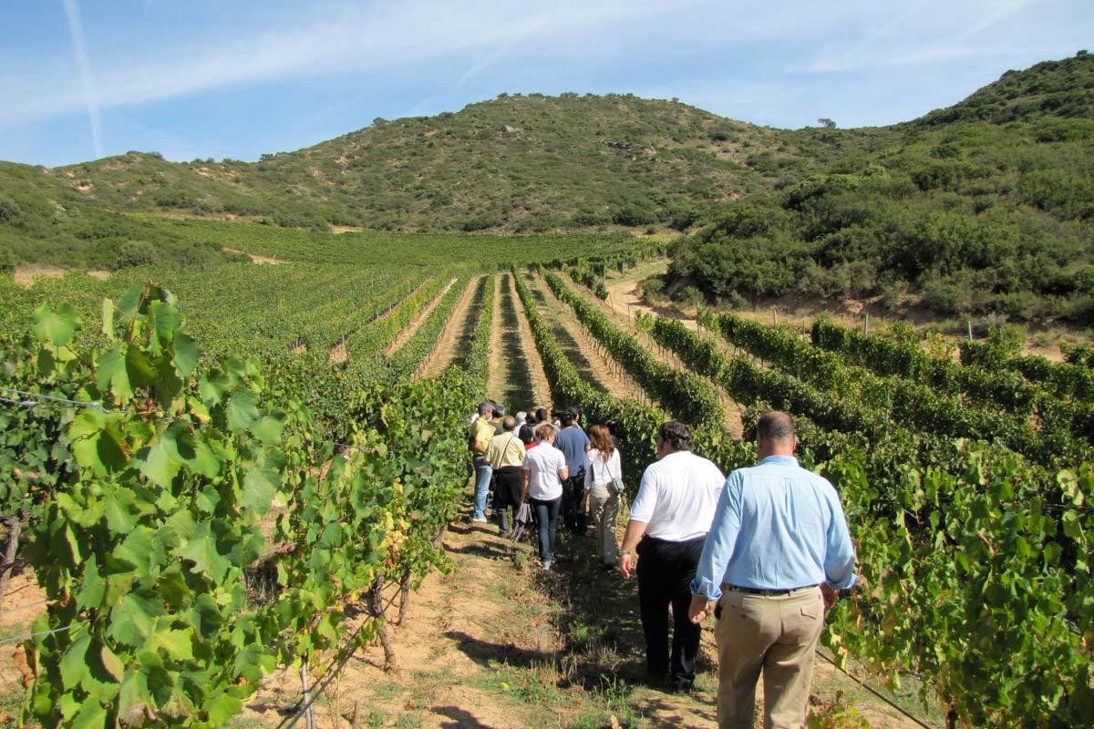 venezia_friuli-winery5