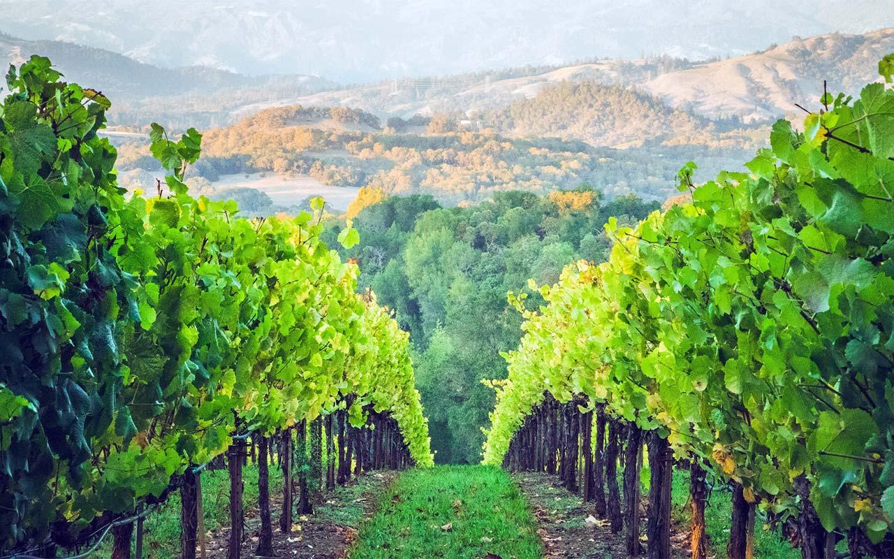 verona-amarone-winery2