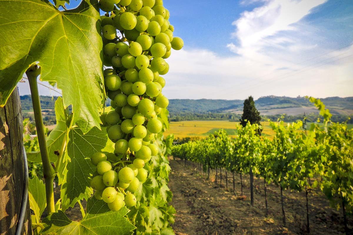 verona-soave-winery5