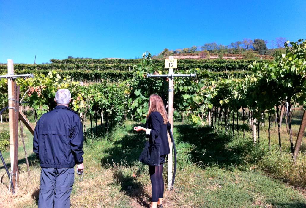 verona-soave-winery6