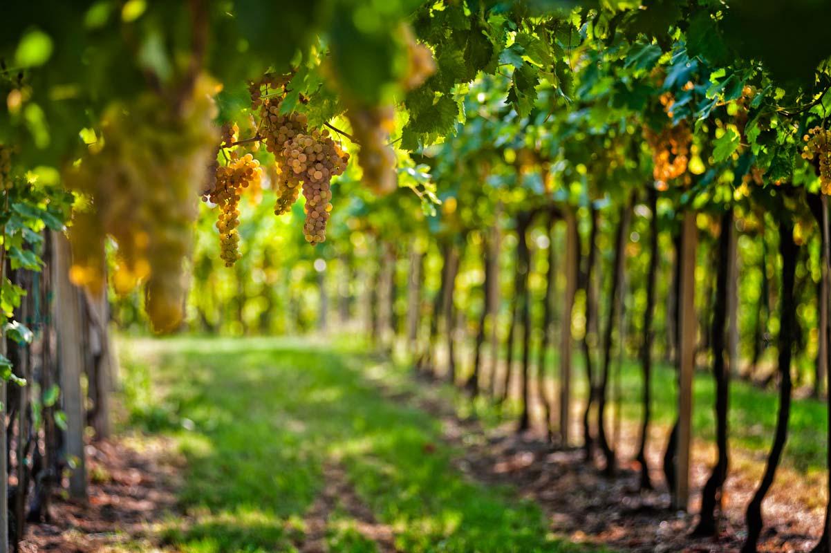 verona-soave-winery8
