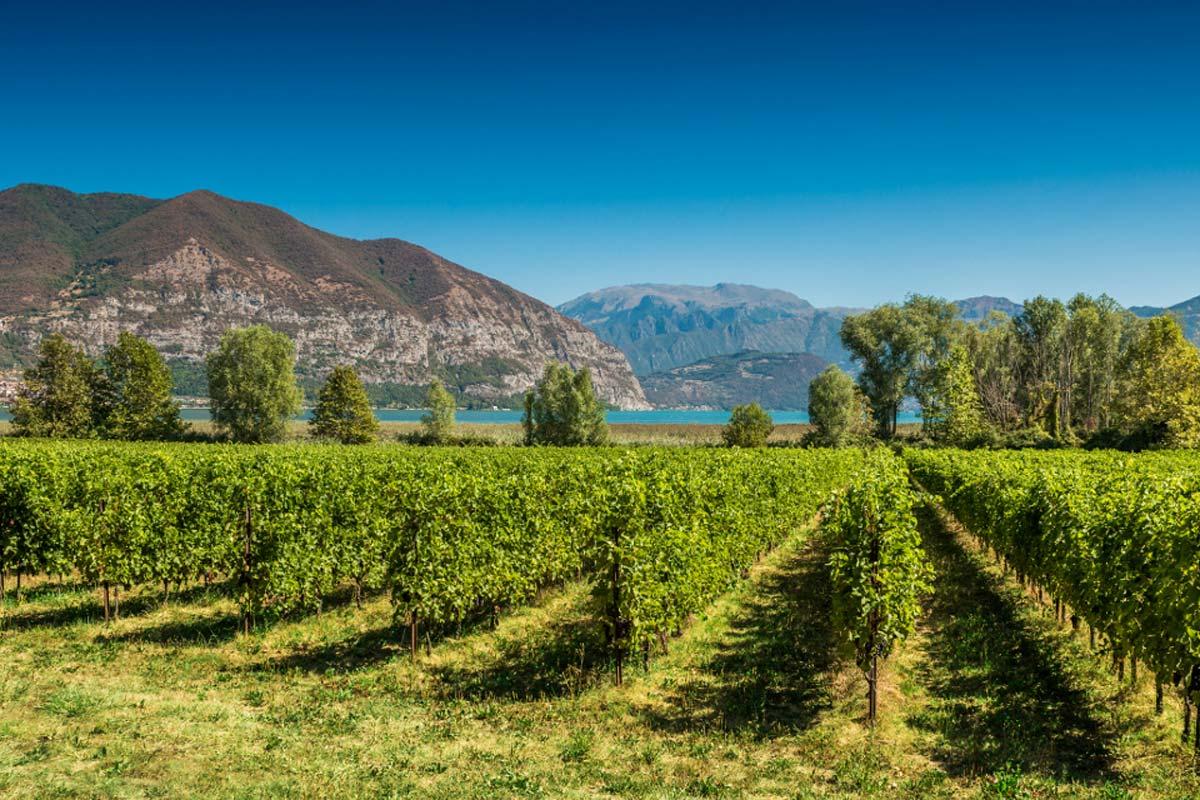 milano-franciacorta-winery2