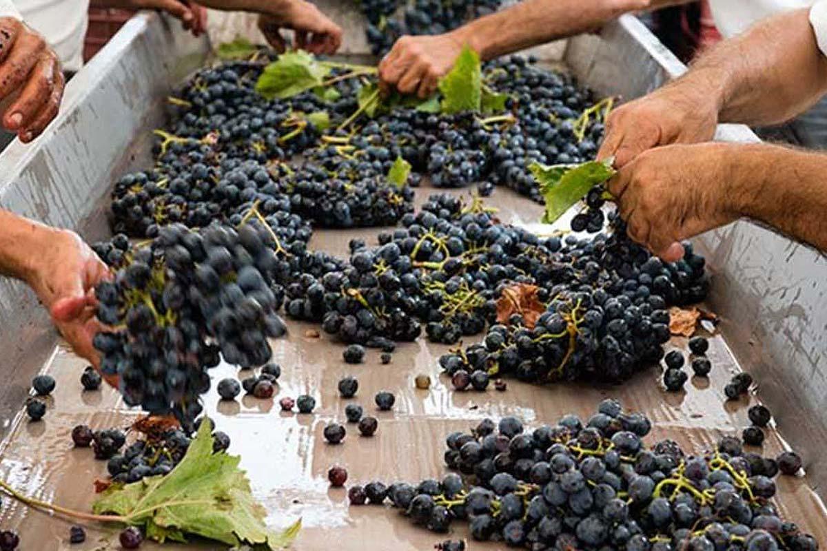sicilia-planeta-winery4