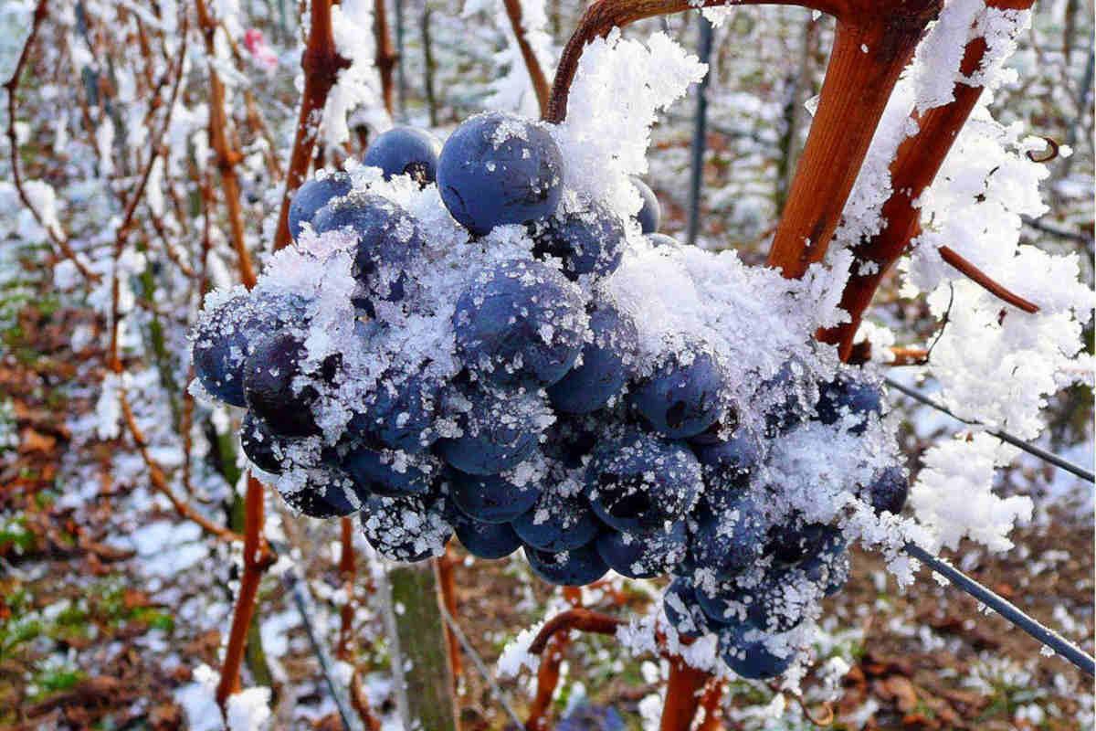 torino-ice-wine1